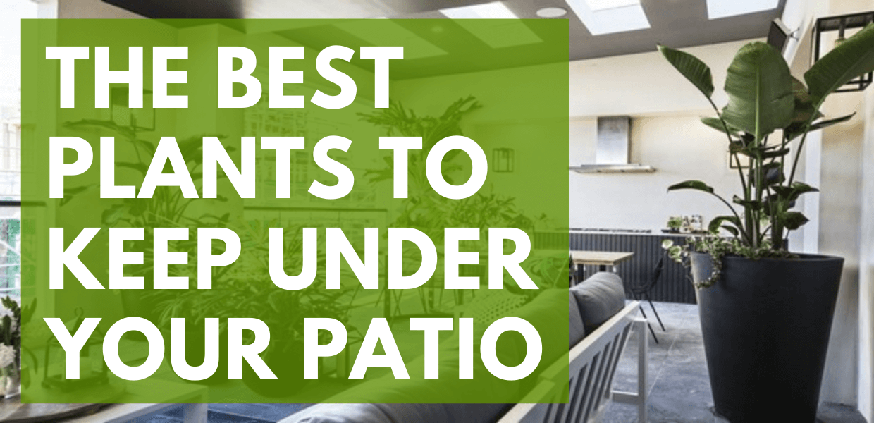 The Best Plants to Keep Under Your Patio