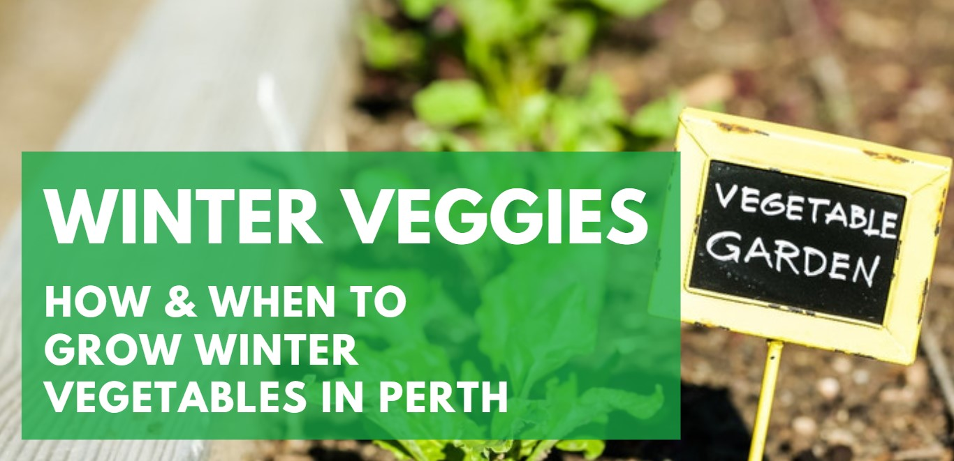 Winter Veggies - How and When to Grow Winter Vegetables in Perth